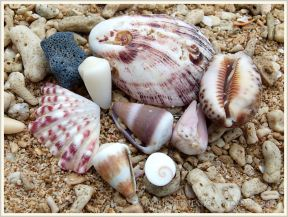 Seashells on coral sand