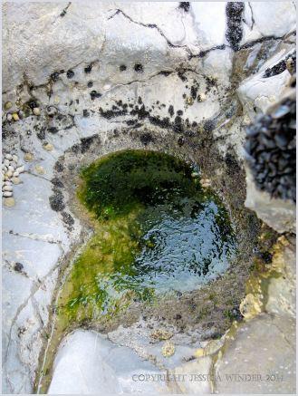 Bio-erosion in limestone at Burry Holms
