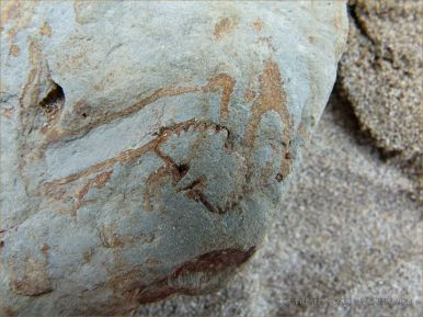 Fossil in Silurian rock at Ferriters Cove