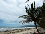 Coconut palms at Four Mile Beach in Port Douglas