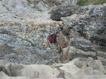 Caswell Bay Mudstones on Carboniferous limestone palae-karst surface