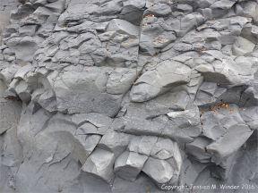 Trace or ichno fossils of marine invertebrate burrows