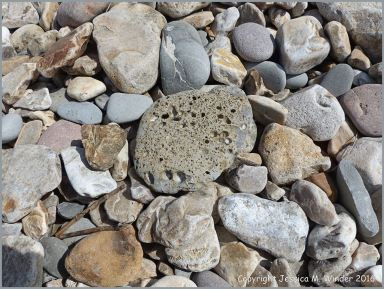 Beach stones on the shore at Charmouth, Dorset, England, including one with holes made by seashore creatures.