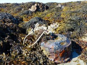 Rusty irom mooring among seaweed at Rocquaine Bay