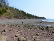 Looking east across the shore at Wasson Bluff