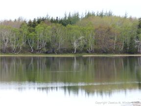 Coastal view with reflections of trees on the smooth water surface