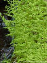 Ferns in St Ann's Provincial Park