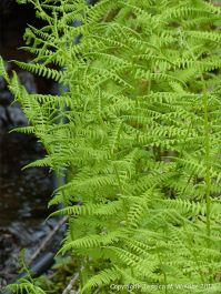 Ferns in St Ann's Provincial Park