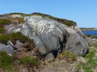 Rocky outcrop with white veins near Morning Star Cove