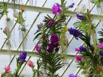 Hanging flowers in the Princess of Wales Conservatory at Kew Gardens