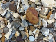 Beach stones derived from the chalk cliffs at South Beach, Studland, Dorset, England.