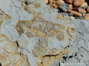 Odd rusty formations in a piece of broken Eype Clay at Seaton in Dorset