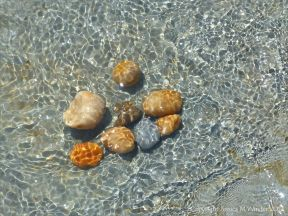Colourful pebbles covered by a pattern of sun-lit rippled water