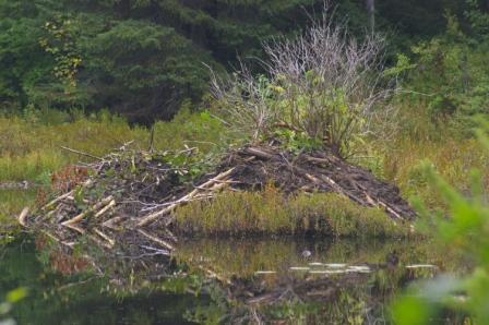 beaver-lodge-kettle-lakes-b