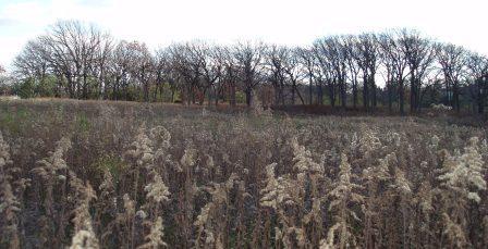mayslake-dog-meadow-to-savanna-b
