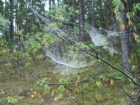 spider-web-b