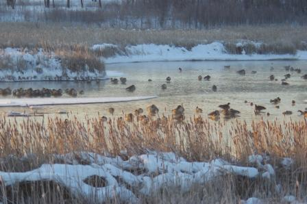 Hidden Lake roost January 19