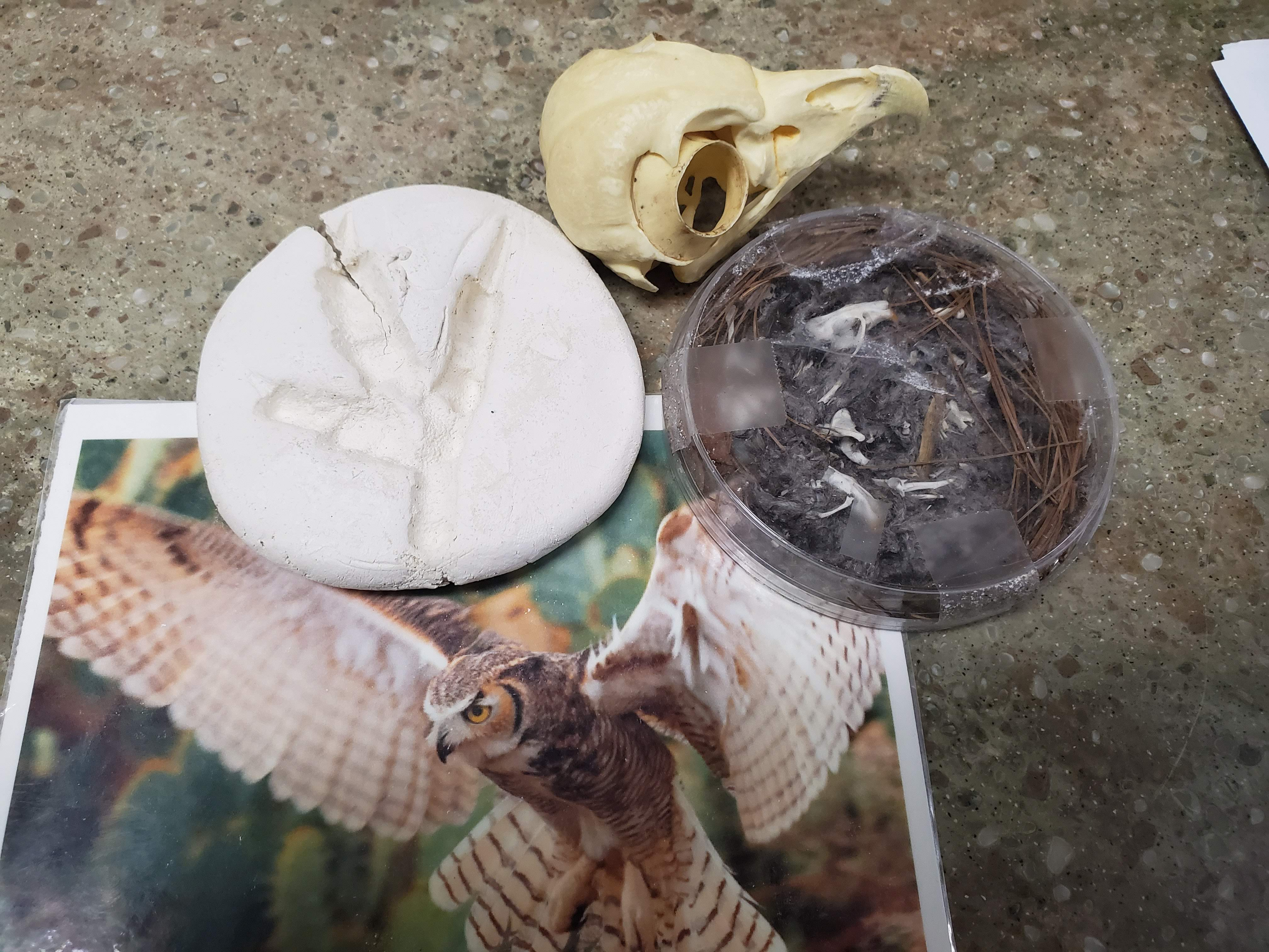 Finding Owl Pellets Nature Into Action