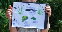 Frog Pond Habitat, Nature Journal, Hop Into Action