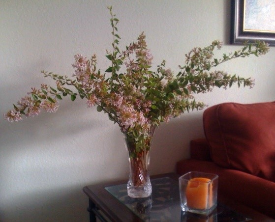 Aromatic Abelia Branches in Vase
