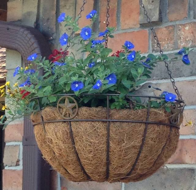 Mourning Dove in Flower Basket