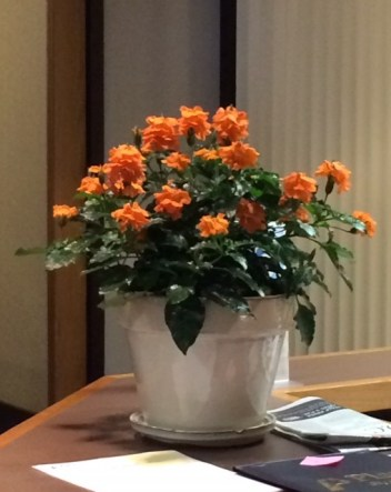 Crossandra in Office Space