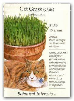 cat grass oats