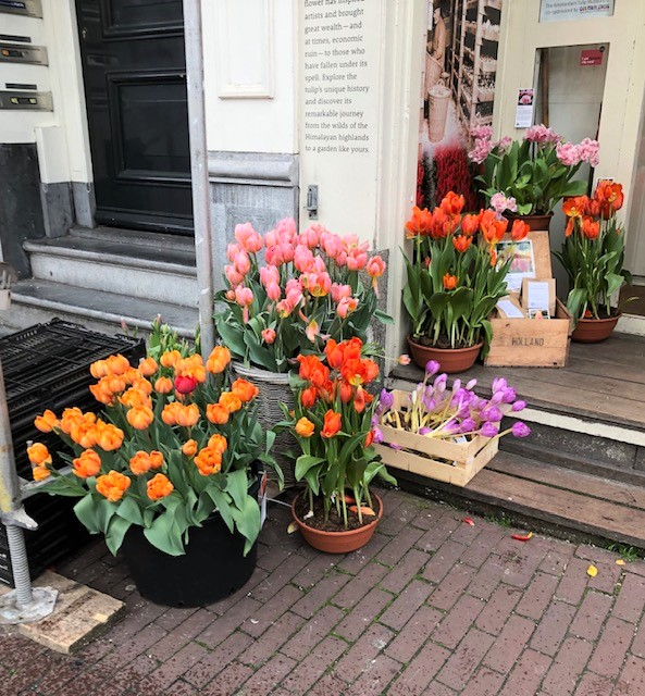 European Tulips in Amsterdam