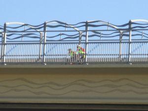 American River, salmon, cyclists, Hazel Avenue bridge