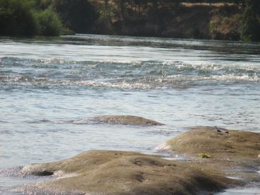 San Juan Rapids, Rossmoor Bar, American River, American River Parkway, water, river, cyclist, trail,