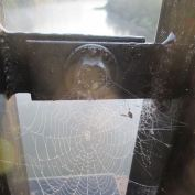 spider web, American River, Fair Oaks bridge, spider