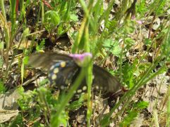 butterfly, American River Parkway, river, Fair Oaks Bridge