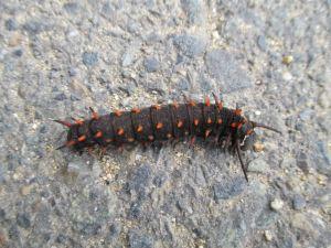 caterpillar, Amerian River Parkway, cyclist, bike trail, morning
