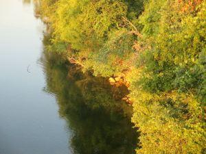 trees, shrubs, American River, mornings, peaceful