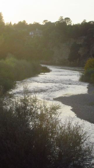 narrow, American River, Fair Oaks Bridge, salmon, ducks, swim, morning, Mallard speak