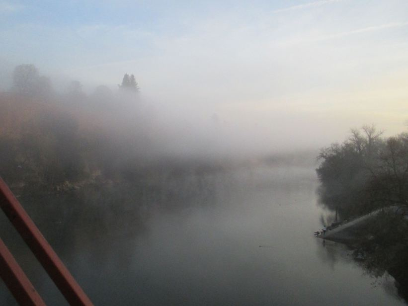 gift, American river, Fair Oaks Bridge, Fair Oaks Bluffs, morning, fog, seagulls, wildlife, mornings