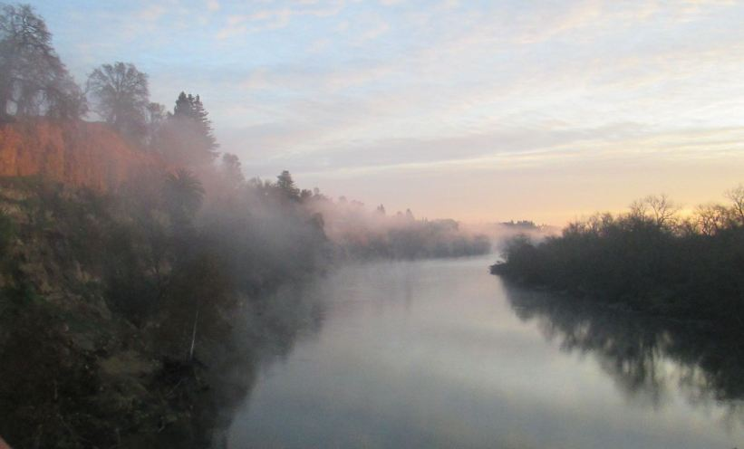 mornings, fog, chill, Fair Oaks Bridge, Fair Oaks Bluffs, American River, nature, writing, seagull, wildlife, chill