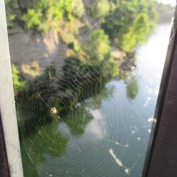 spider web, experience, beauty, Fair Oaks Bridge, American River, Fair Oaks Bluffs