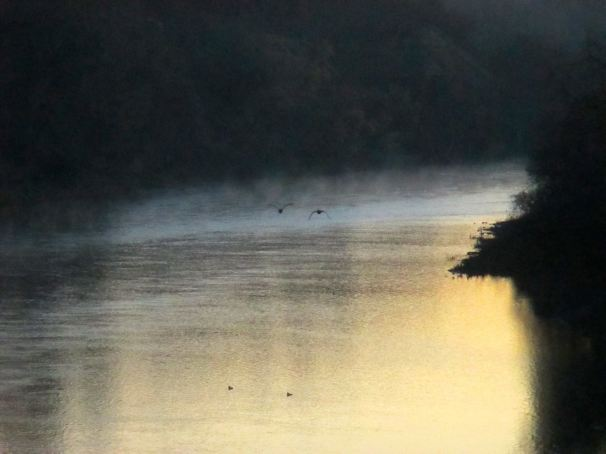 mornings, shadows, mist, Fair Oaks Bridge, nature, Canada Geese, writing, American River