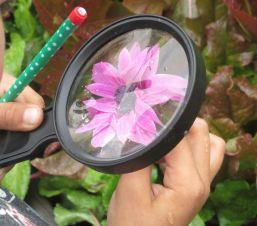 magnifying glass, flower, Nature Detectives, after school program