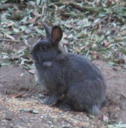 rabbit, Fair Oaks, Fair Oaks Bridge, peaceful, peace