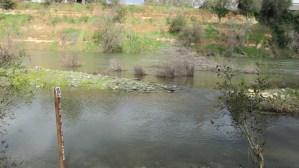 flood, American River, trail, walk, scenic, water