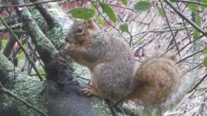 squirrel, eat, tree, hide, American River Parkway,