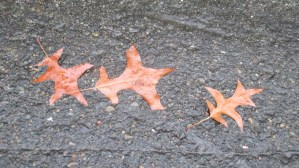 autumn leaves, fall, Spring, Winter, pavement, Fair Oaks Bridge, Bridge street, color