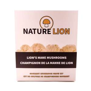 Lion's mane grow kit