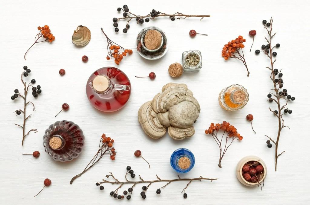 Mushroom Tinctures For Health