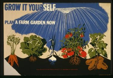 Image result for grow your own food poster
