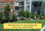 Why We Have to Start Gardening in the City… RIGHT NOW