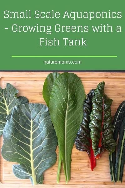 Small Scale Aquaponics fish tank