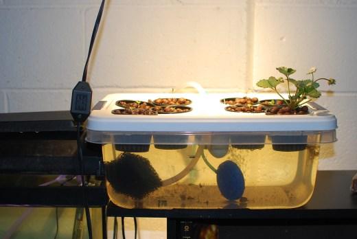 aquaponics system 003